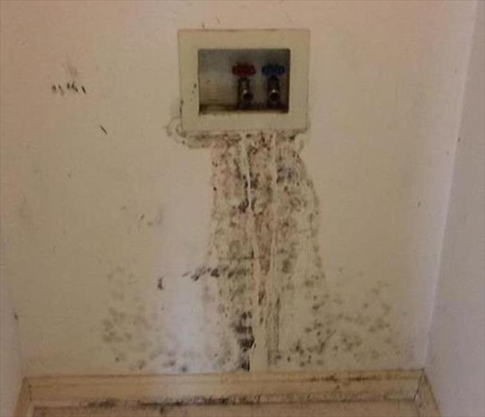 Seal Beach Mold Remediation  Before