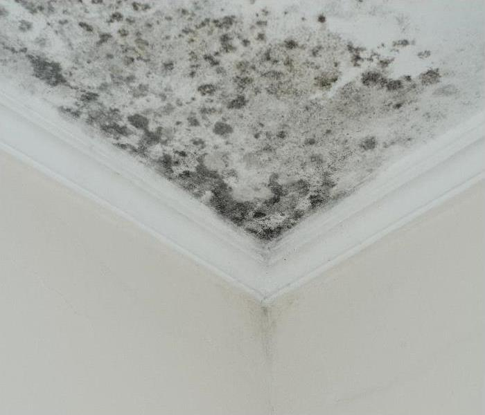 mold damaged home