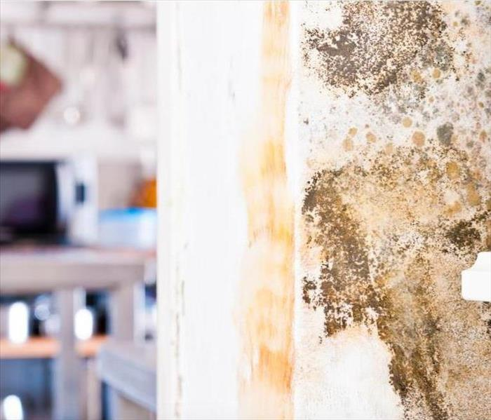 Mold Remediation Some Ways to Avoid Spreading a Mold Infestation Throughout Your Seal Beach Home